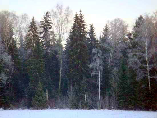 Земельные участки в поселке Лисичкин лес